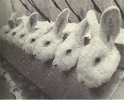 It's horrible enough for immobilized bunnies in the Draize lab test but using human creations?