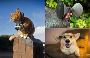 Wearables for People and their Animal Counterparts