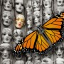 monarch programming